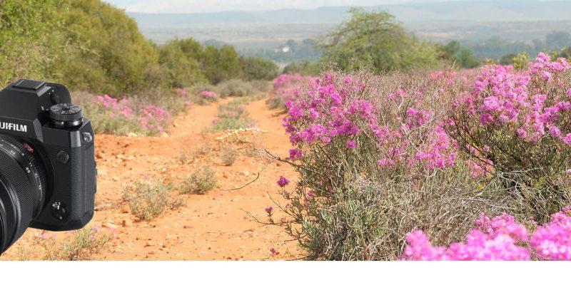 Digital photography Fujifilm X-H1 Review - Sword Digital Art, Mossel Bay, Western Cape, South Africa